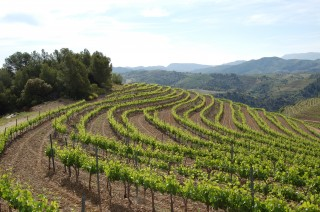 Priorat